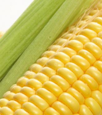 Насіння кукурудзи НС 2014