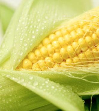Насіння кукурудзи ДКС 3912