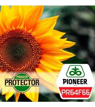Насіння соняшнику Піонер PR64F66