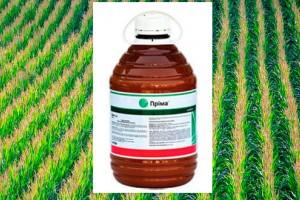 Поради щодо застосування гербіциду Пріма в посівах кукурудзи та зернових культур