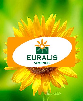 Семена подсолнечника Euralis
