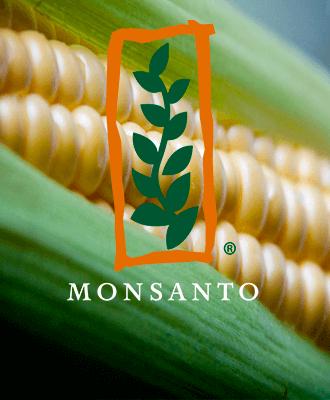Насіння кукурудзи Monsanto