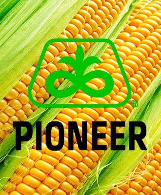 Насіння Кукурудзи Піонер