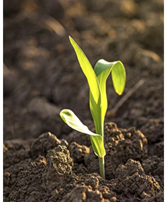 Почвенные гербициды