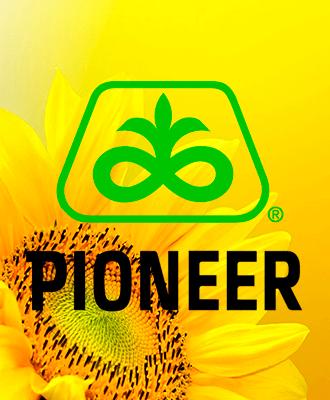 Семена Подсолнечника Pioneer
