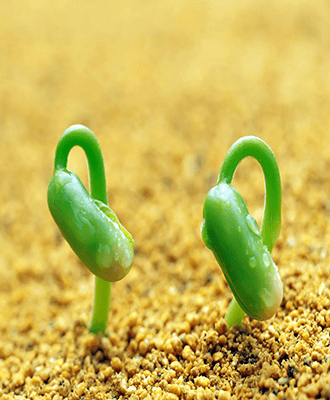 Регулятори росту