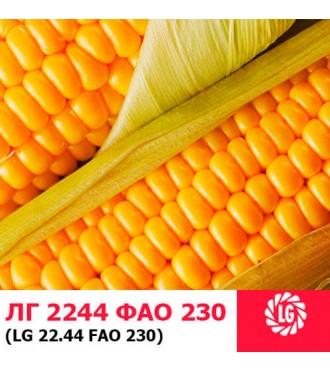 Насіння кукурудзи ЛГ 2244