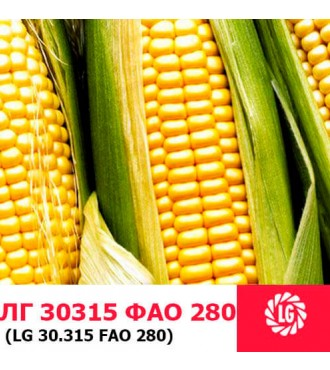 Насіння кукурудзи ЛГ 30315