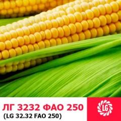 Насіння кукурудзи ЛГ 3232