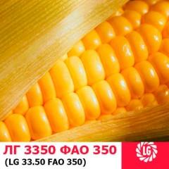 Насіння кукурудзи ЛГ 3350