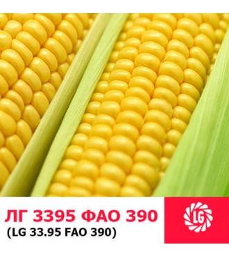 Семена кукурузы ЛГ 3395