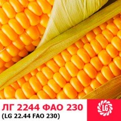 Семена кукурузы ЛГ 2244
