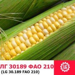 Семена кукурузы ЛГ 30189