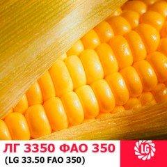 Семена кукурузы ЛГ 3350
