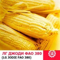 Насіння кукурудзи ЛГ Джоді (Jodie)