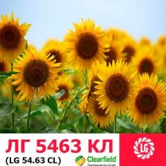 Насіння соняшнику ЛГ 5463