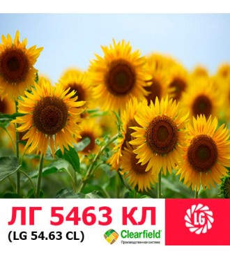 Семена подсолнечника ЛГ 5463