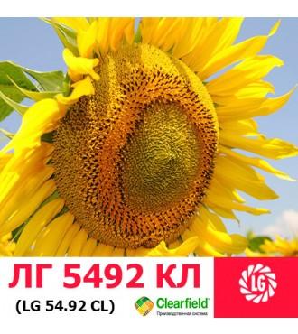 Насіння соняшнику ЛГ 5492 HO