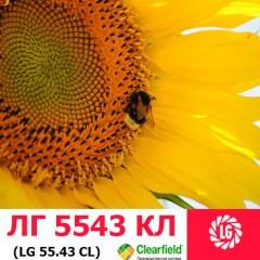 Насіння соняшнику ЛГ 5543