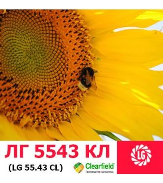 Семена подсолнечника ЛГ 5543