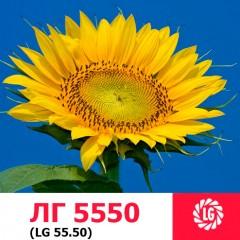 Насіння соняшнику ЛГ 5550