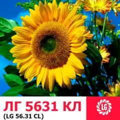 Семена подсолнечника ЛГ 5631