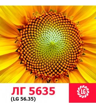 Насіння соняшнику ЛГ 5635