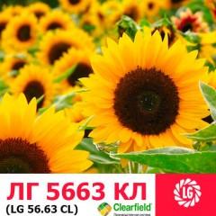 Насіння соняшнику ЛГ 5663