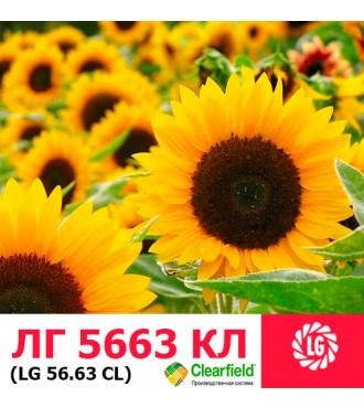 Семена подсолнечника ЛГ 5663