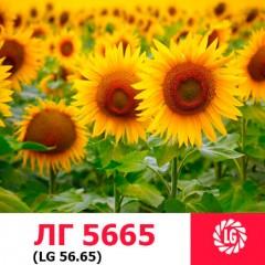 Семена подсолнечника ЛГ 5665