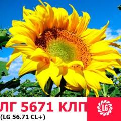 Семена подсолнечника ЛГ 5671