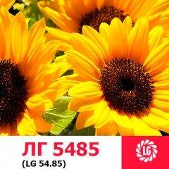 Насіння соняшнику ЛГ 5485