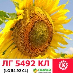 Семена подсолнечника ЛГ 5492 HO