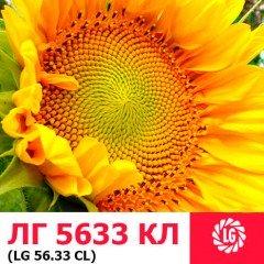Семена подсолнечника ЛГ 5633