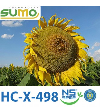 Насіння Соняшнику HC-X-498 Еліт
