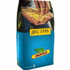 Семена кукурузы Монсанто ДКС3795