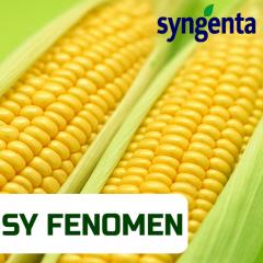 Семена кукурузы ФЕНОМЕН