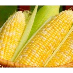 Кукуруза ИНАГУА (INNAGUA)