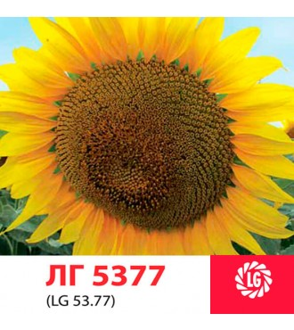 Насіння соняшнику ЛГ 5377