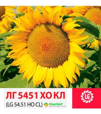 Насіння соняшнику ЛГ 5451