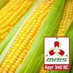 Семена кукурузы Круг 340 ВС МАИС