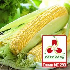 Насіння кукурудзи Сплав МС 290 МАЇС