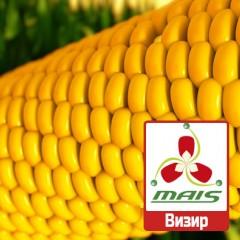Насіння кукурудзи Візир МАЇС
