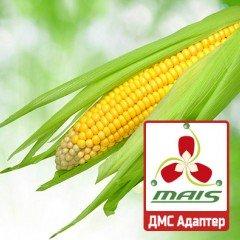 Насіння кукурудзи ДМС Адаптер МАЇС