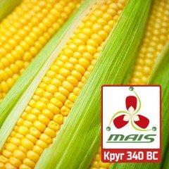 Насіння кукурудзи Круг 340 ВС МАЇС