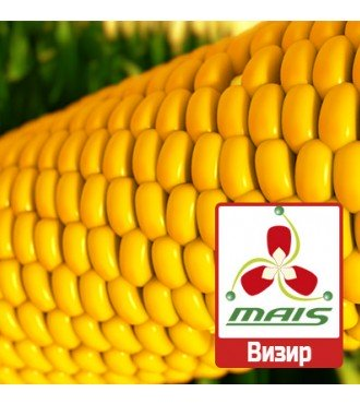 Семена кукурузы Визир МАИС