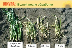 Оценка причиненного гербицидом ущерба