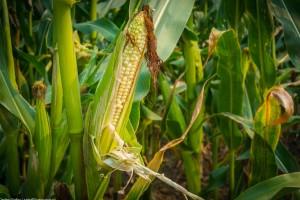 Возрос импорт пестицидов в Украину. Среди лидеров гербицид «Майстер Пауэр»