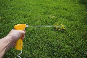 Устойчивость сорных растений к гербицидам
