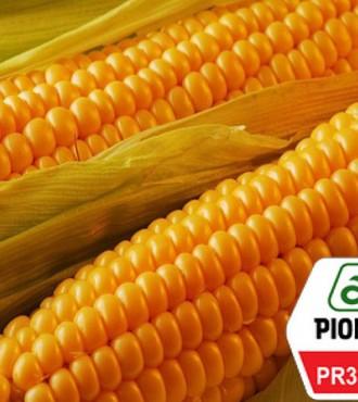 Насіння кукурудзи Pioneer PR38N86